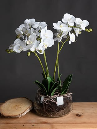 White Faux Orchid in Glass Pot