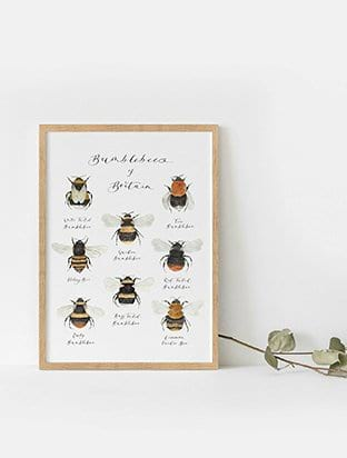 British Bumble Bee Illustrated Art Print
